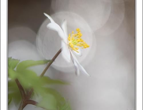 Vårens prinsesse