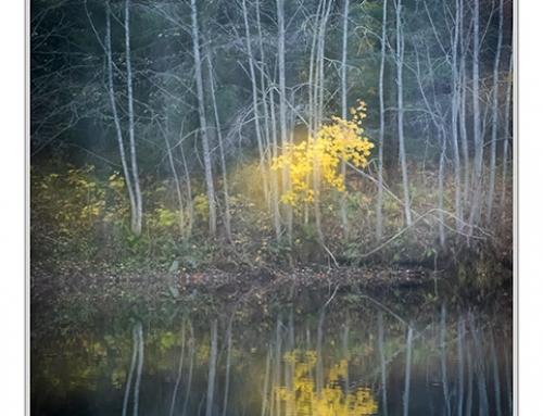 Oktoberlys og Vårgårda