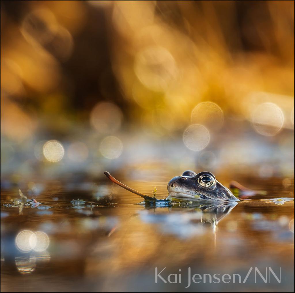 Foto: Kai Jensen