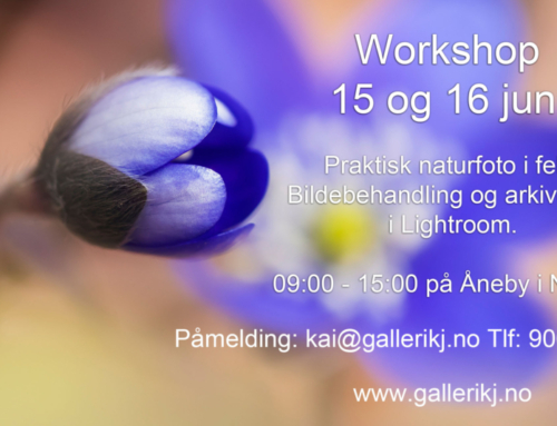 Workshop 15 og 16 juni