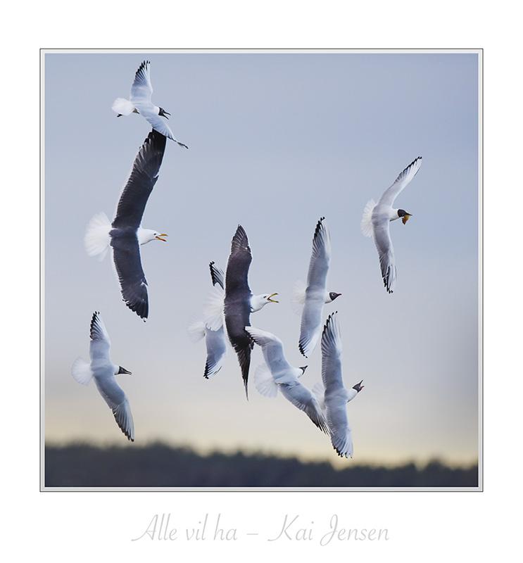 Full fart hos fuglene
